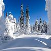 Frozen trees on the Dalton Highway, Alaska
