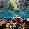 Tropical reef, Fiji Islands